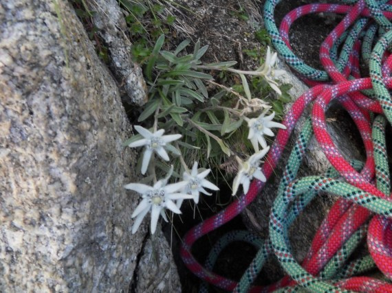 Edelweiss...