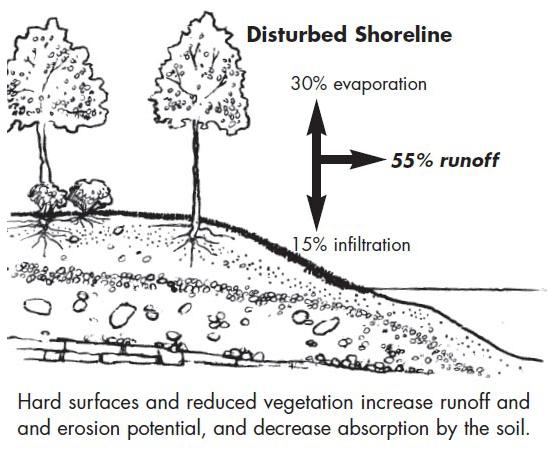 Graphic showing disturbed shoreline