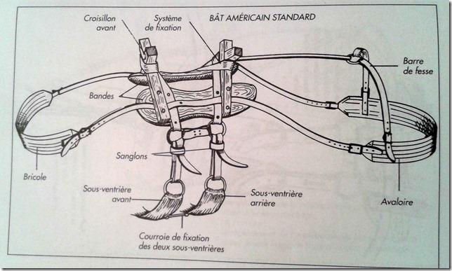 bat-americain