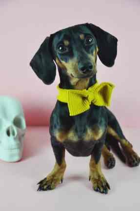 Bow Tie Pet