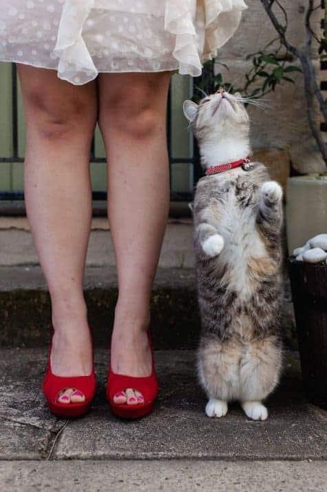 Cats at Weddings 4
