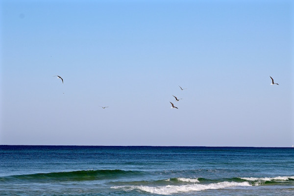 birds flying destin florida