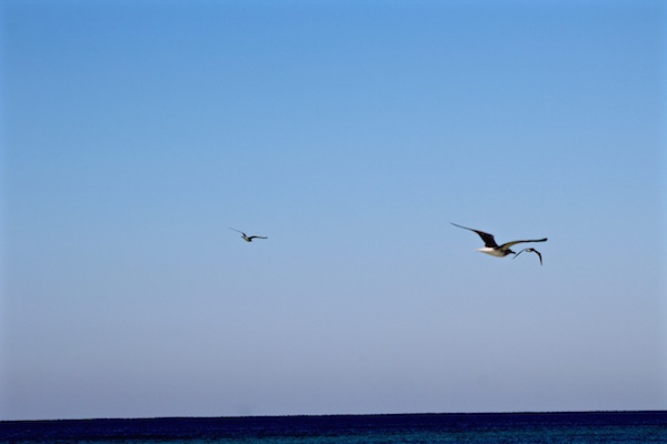 birds flying destin florida 1