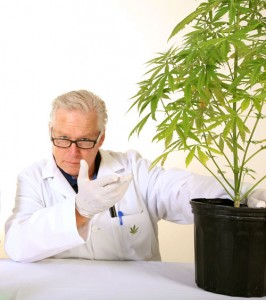 Can we prevent Alzheimer's disease with THC, the active coumpound in mariuana?