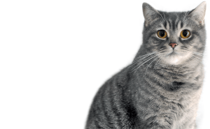 When Are Cats Fully Grown?