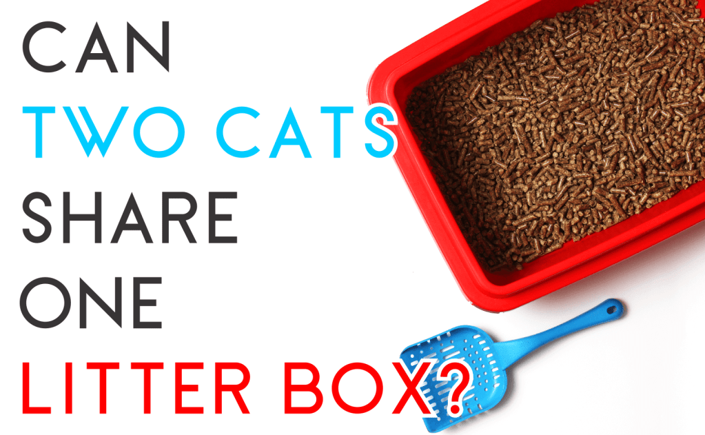 Can Two Cats Share One Litter Box?