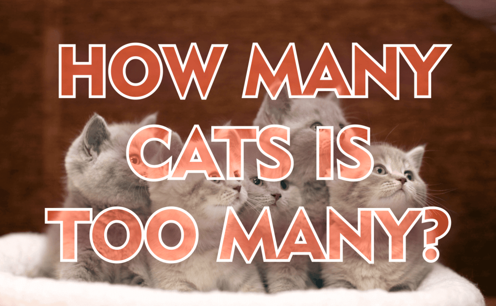 How Many Cats Is Too Many?
