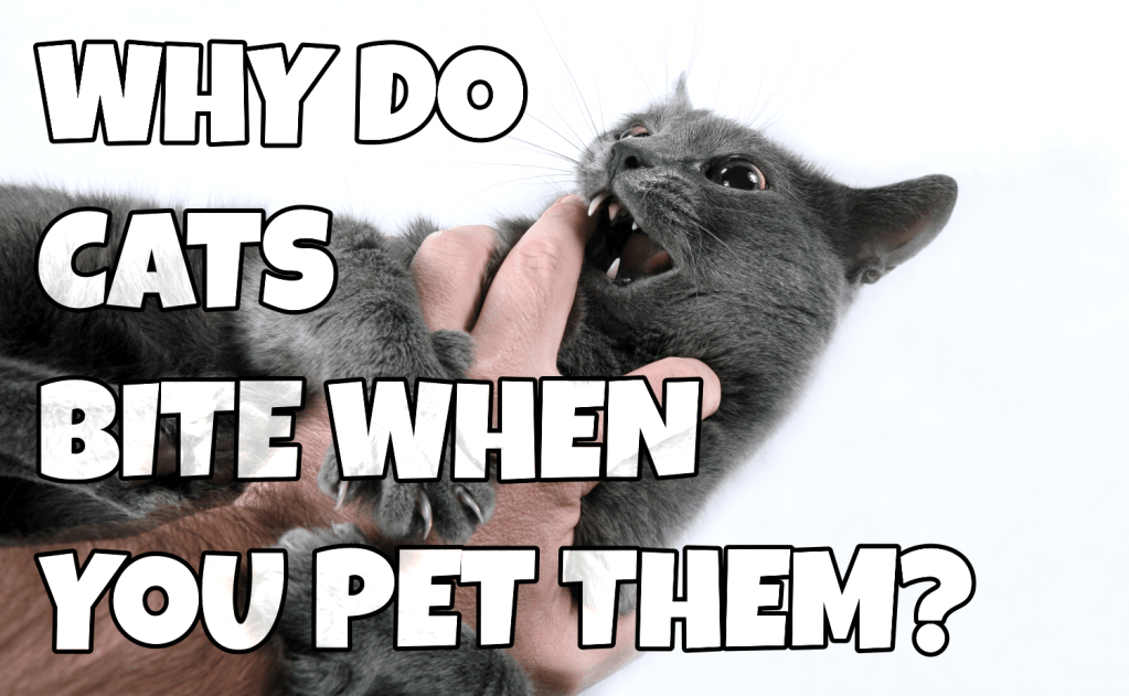 Why Do Cats Bite When You Pet Them?