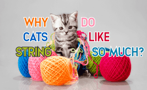 Why Do Cats Like String So Much?