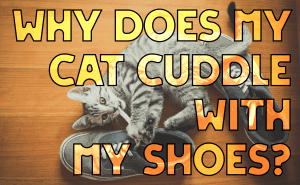 Why Does My Cat Cuddle With My Shoes?