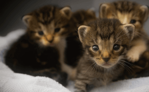 When Do Mother Cats Leave Their Kittens?