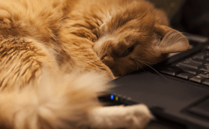Why Do Cats Like Laptops So Much?