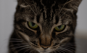 Why Do Cats Stare at Their Owners?