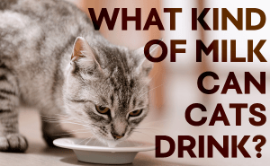 What Kind Of Milk Can Cats Drink?