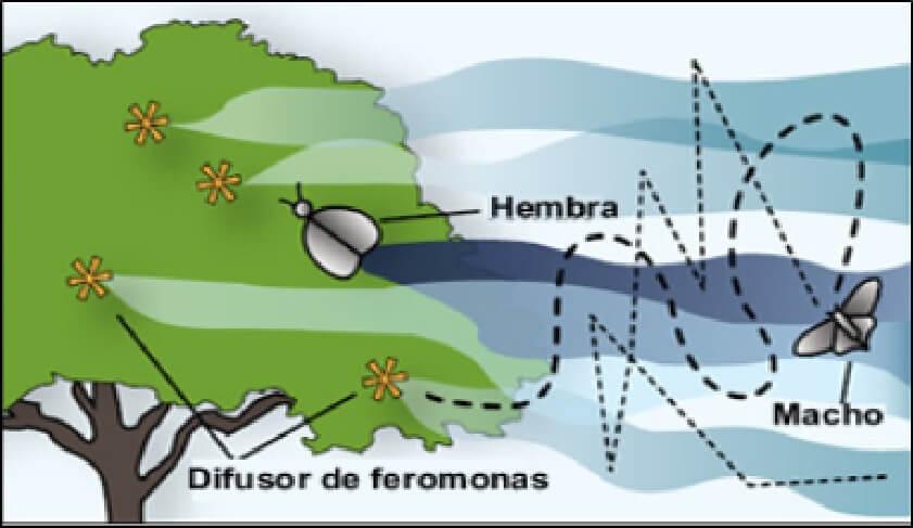 Las feromonas como plaguicidas para insectos