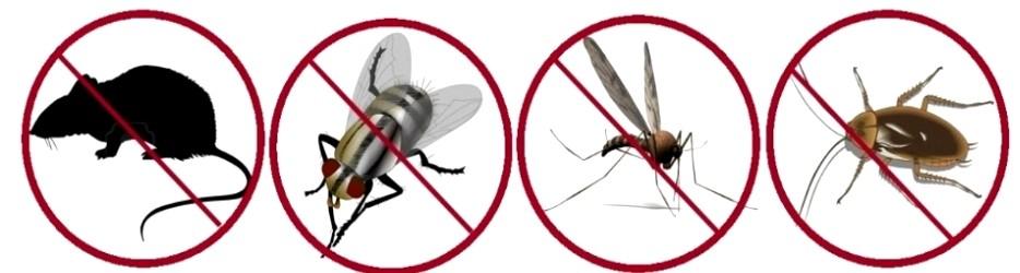 principales tipos de plagas de insectos