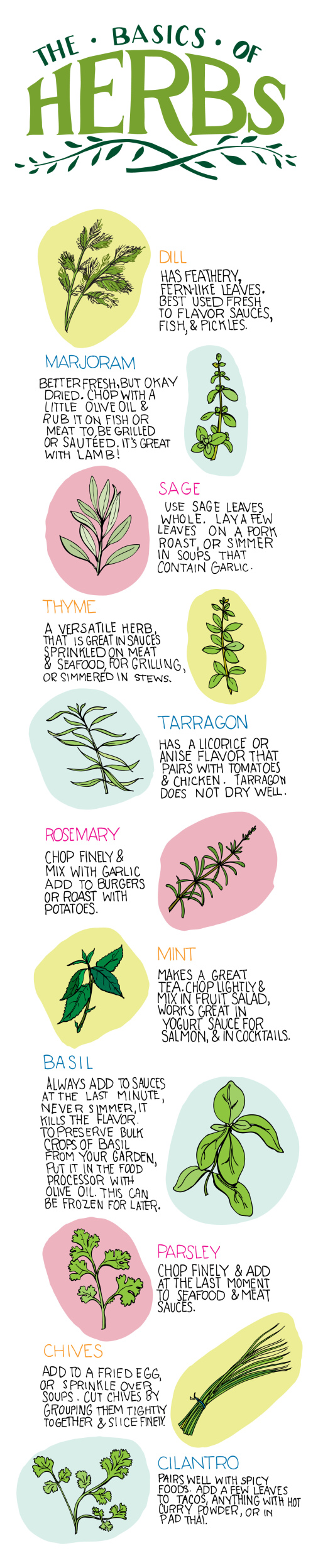 The Basics of Herbs Infographic - Best Infographics