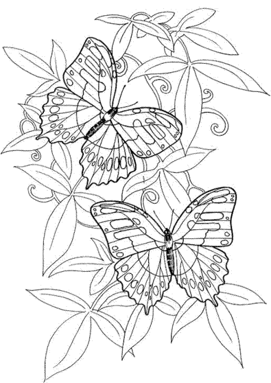 butterfly-coloring-pages-for-adults