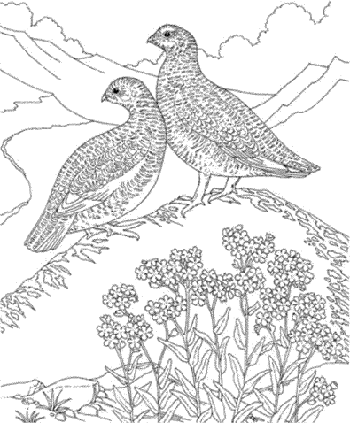hard-bird-coloring-pages-for-adults