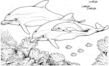 coloring-page-dolphin
