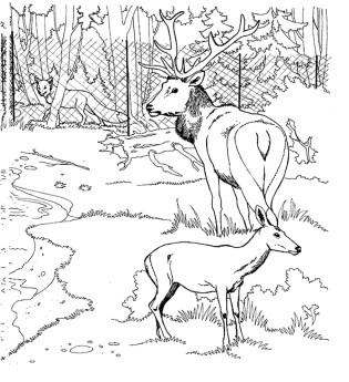 coloring-pages-deer