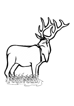 deer-coloring-pages-for-kids