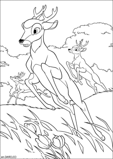 deer-hunting-coloring-pages