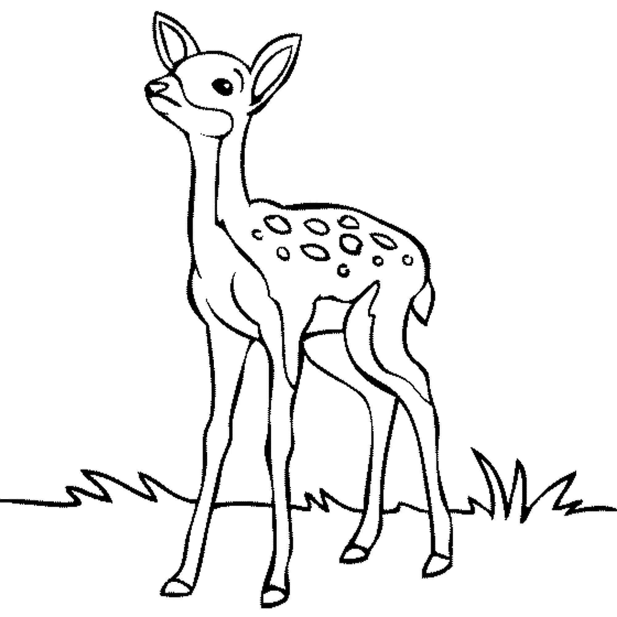 Deer Color Page