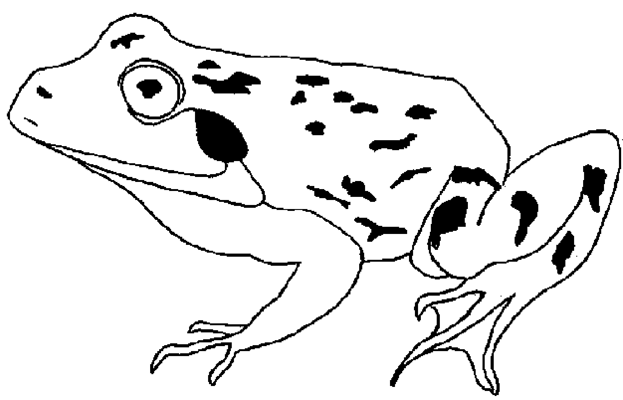Frog Coloring Pages Theme for Kids