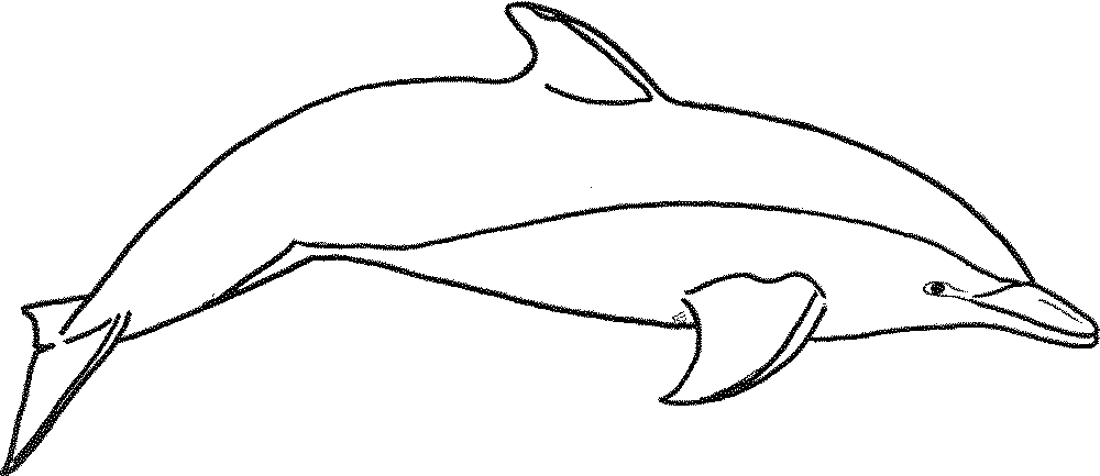 Gallery Of My Experience Making Dolphin Coloring Pages