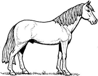 coloring-page-horse