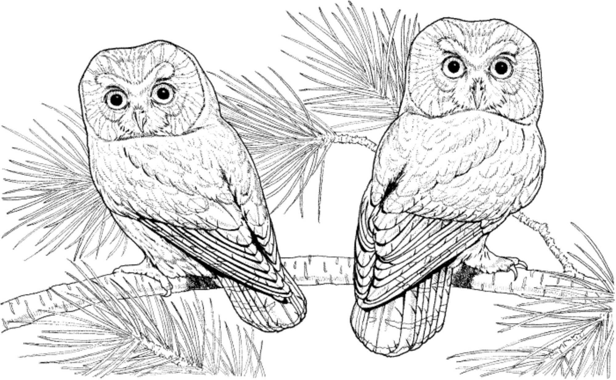 Print Download Owl Coloring Pages For Your Kids
