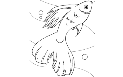 free-coloring-pages-of-fish