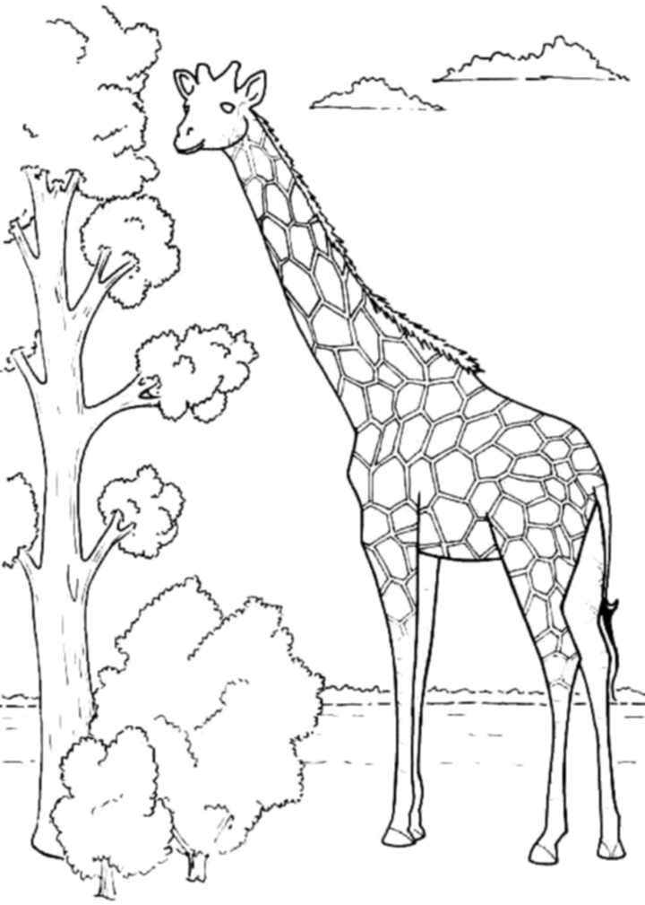 Print & Download - Giraffe Coloring Pages for Kids to Have Fun