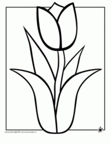 hawaiian-flowers-coloring-pages