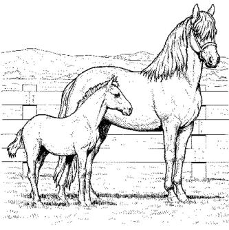 horses-coloring-pages