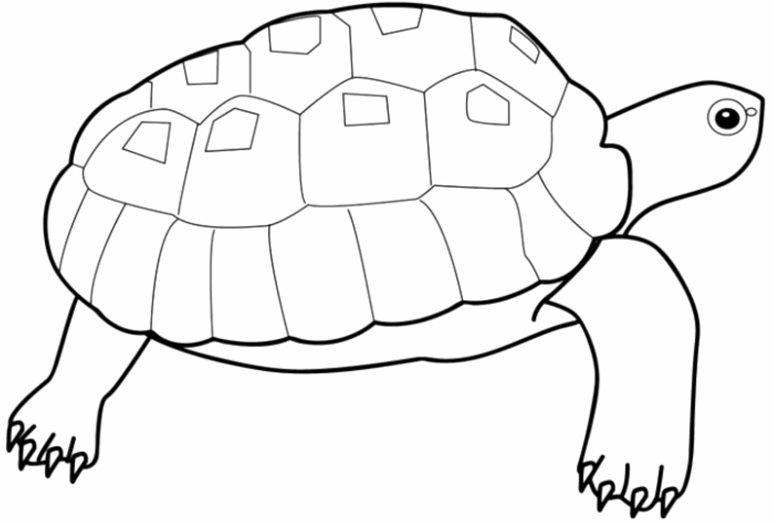 Print & Download - Turtle Coloring Pages as the