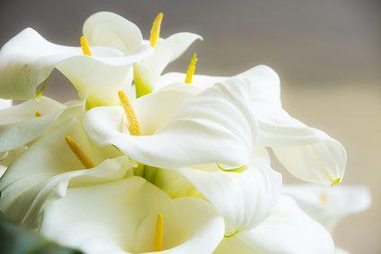 Blumen und Krnze die Beerdigung  Bedeutungen und mehr