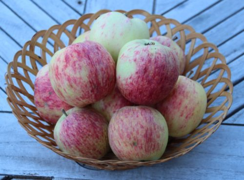 my organic apples