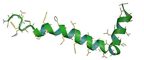 抗菌肽、抗病毒肽 - Best Biochem   多肽   蛋白   抗體   小核酸   抑制劑