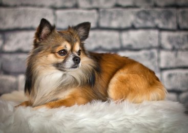 5 Things Every Dog Owner Must Have in Their House
