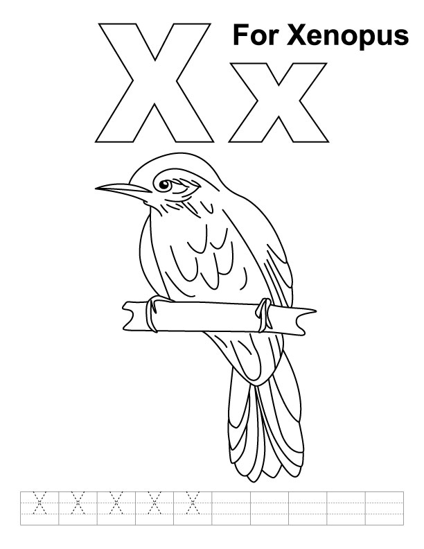 X for xenopus coloring page with handwriting practice