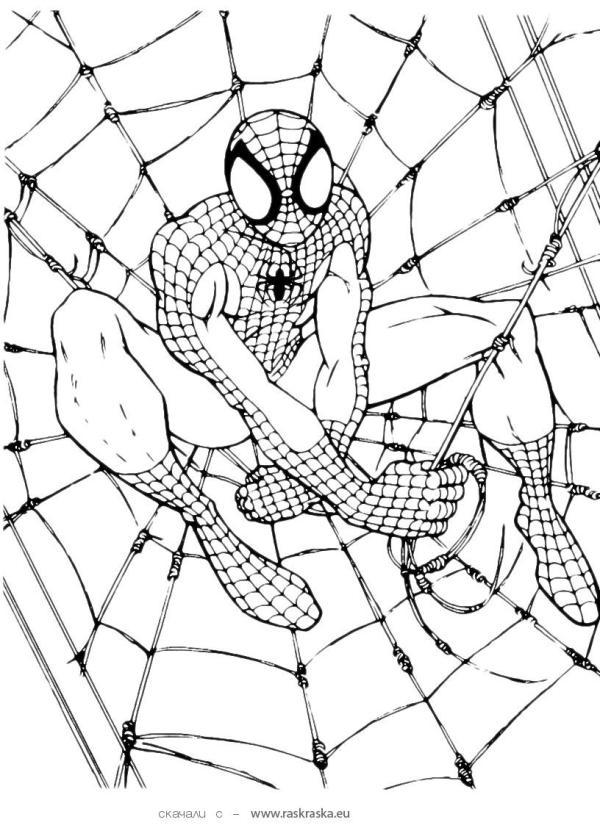 free printable spiderman coloring
