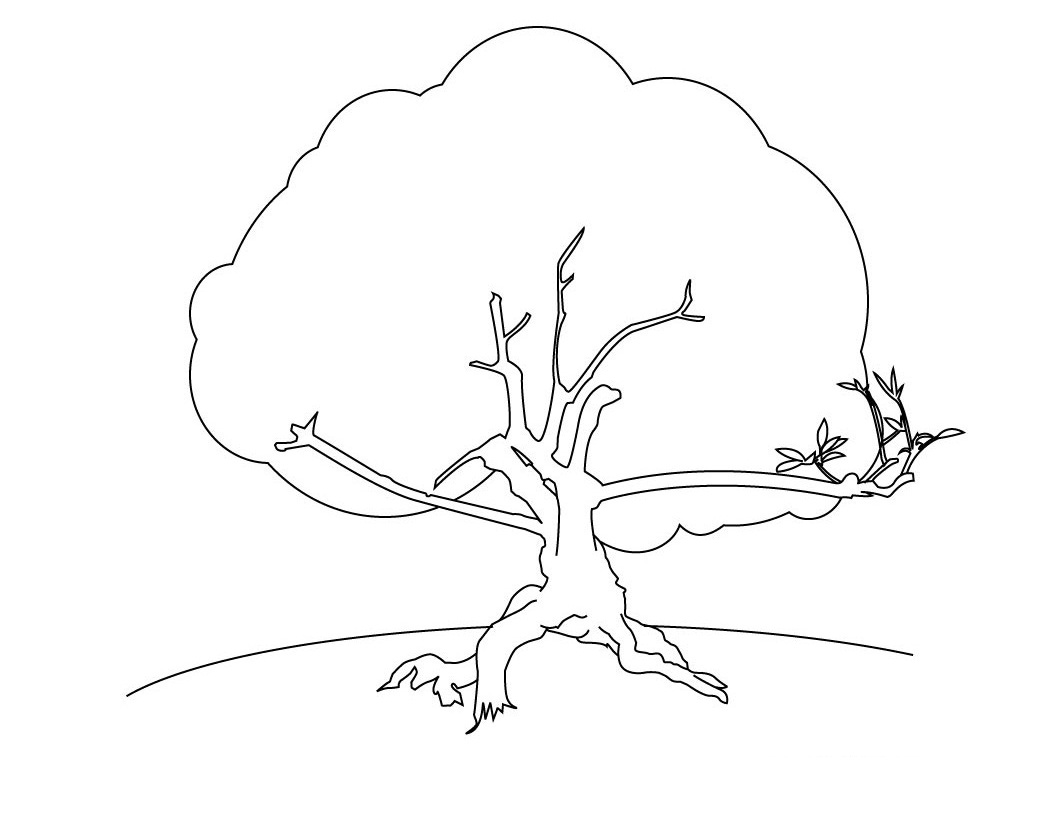 Coloring Pages Parts Of A Tree