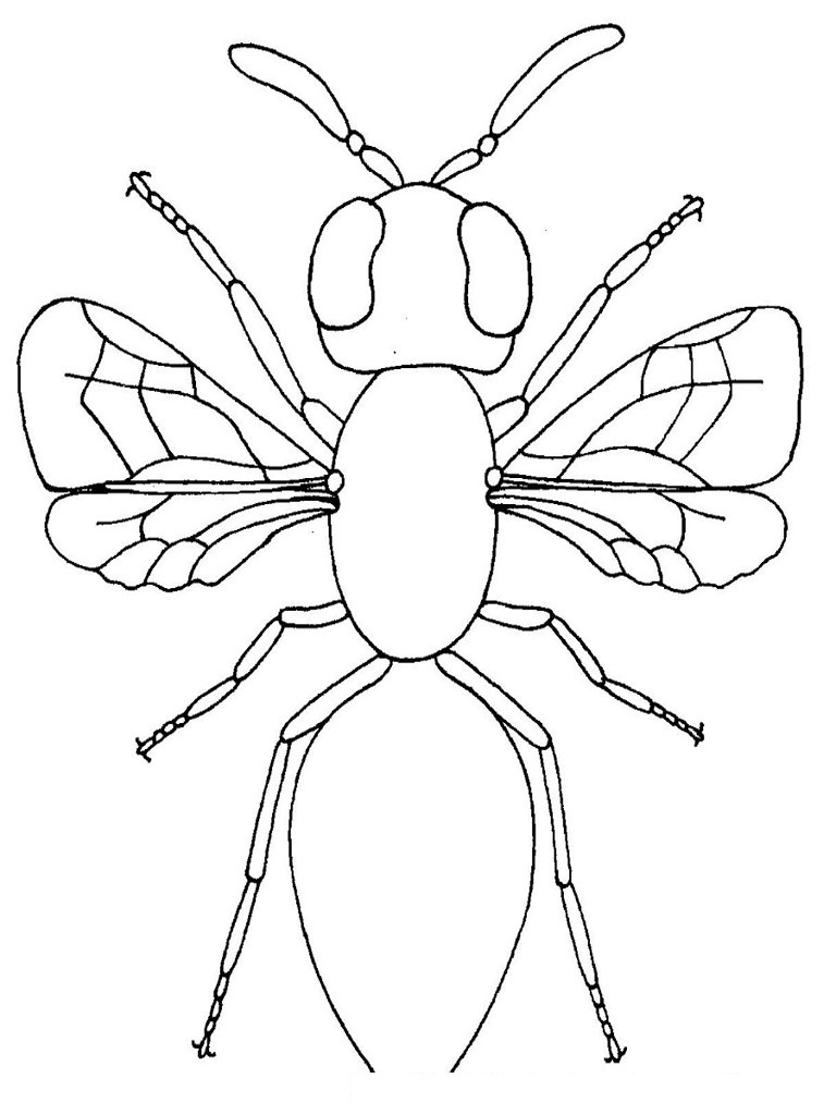 Insects Body Parts For Kids