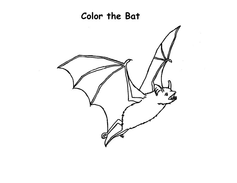 Bat Wing Coloring Pages