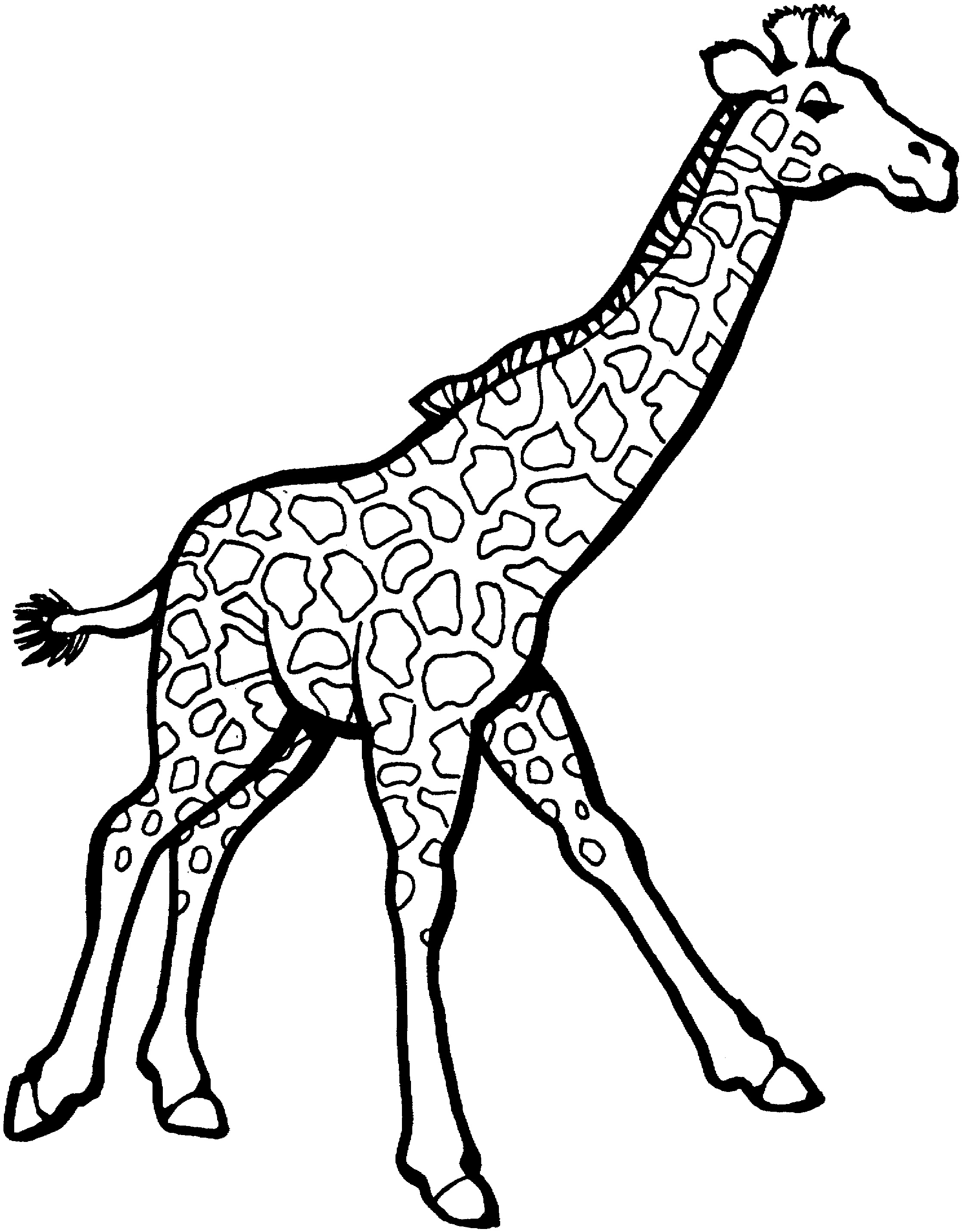 giraffe colouring