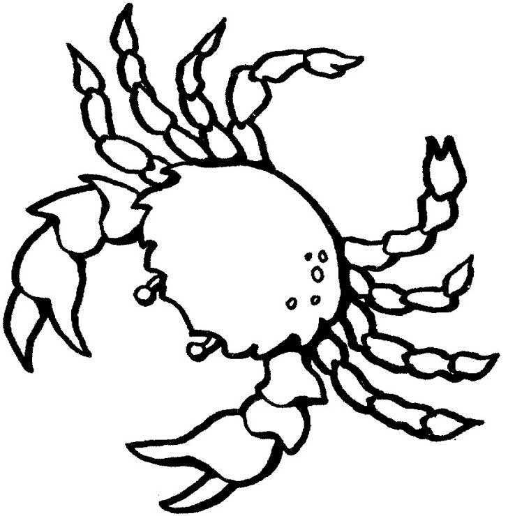Shrimp Under Water Coloring Page