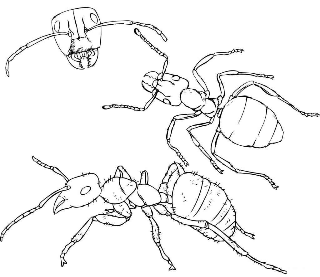 Free Printable Ant Coloring Pages For Kids