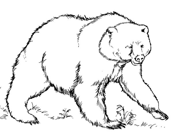 coloring pages of bears # 5